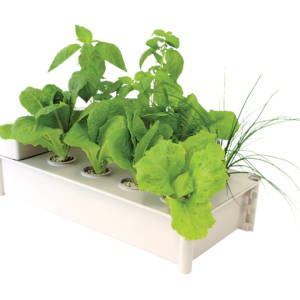 resized salad in box greens